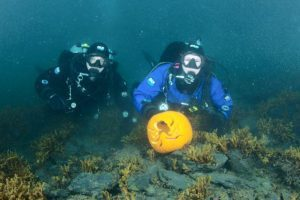 pumpkin in the sea