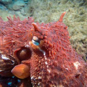 alaska scuba diving dive