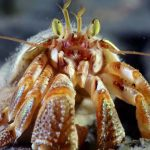 crab scuba dive alaska diving