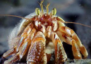 crab scuba dive alaska diving