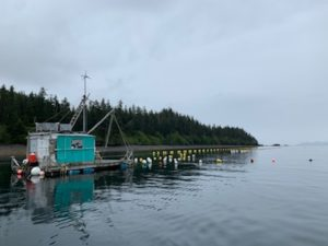 perry island oyster farm prince william sound