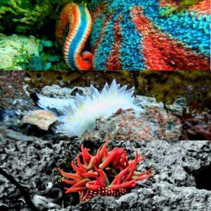 Life Underwater in Alaska